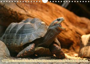 Schildkröten - Gepanzerte Urzeitwesen