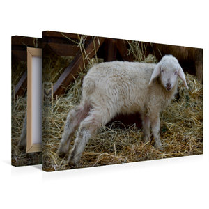Premium Textil-Leinwand 45 cm x 30 cm quer Lämmchen im Stroh