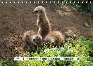 Erdmännchen - Die Kobolde im Tierreich (Tischkalender 2019 DIN A
