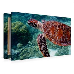 Premium Textil-Leinwand 75 cm x 50 cm quer Grüne Meeresschildkrö
