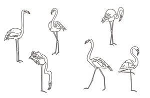 Flamingo, Faultier und Co.