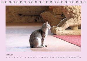 Weltkatzen (Tischkalender immerwährend DIN A5 quer)