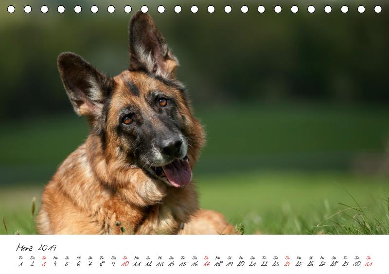 Deutsche Schäferhunde - Liebenswerte Graunasen (Tischkalender 2 - zum Schließen ins Bild klicken
