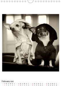 CHIHUAHUA CHIC Photos Marion Koell / UK-Verison (Wall Calendar 2