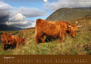 Schottische Hochlandrinder - Highland Cattle (AT-Version)