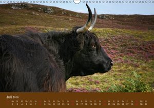 Schottische Hochlandrinder - Highland Cattle (AT-Version)
