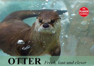 Otter. Frech, laut und clever (Wandkalender 2019 DIN A2 quer)