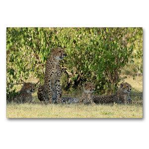 Premium Textil-Leinwand 90 cm x 60 cm quer Geparden unter schatt
