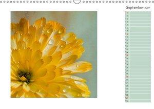 Blütenträume (Wandkalender 2019 DIN A3 quer)