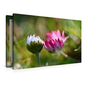 Premium Textil-Leinwand 90 cm x 60 cm quer Zwei Gänseblümchen