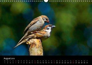 Singvögel in Deutschland