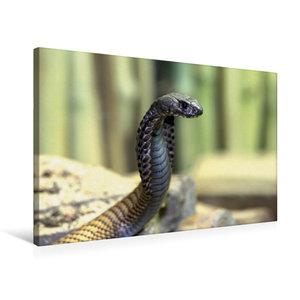 Premium Textil-Leinwand 75 cm x 50 cm quer Gefährliche Schlangen