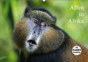 Affen in Afrika (Wandkalender 2019 DIN A2 quer)