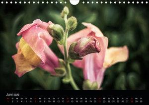 Vintage - Naturaufnahmen (Wandkalender 2020 DIN A4 quer)