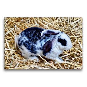 Premium Textil-Leinwand 75 cm x 50 cm quer Schwarz-weißes Kaninc
