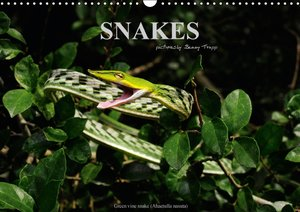 SNAKES / UK-Version (Wall Calendar 2015 DIN A3 Landscape)