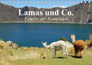 Lamas und Co. Familie der Kameliden