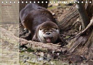 Otters / UK-Version / Birthday Calendar (Table Calendar perpetua