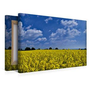 Premium Textil-Leinwand 45 cm x 30 cm quer Im Rapsfeld