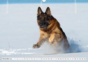 Deutscher Schäferhund - Der beste Freund des Menschen