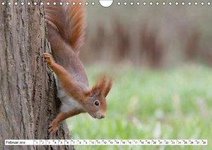Eichhörnchen im Park (Wandkalender 2019 DIN A4 quer)