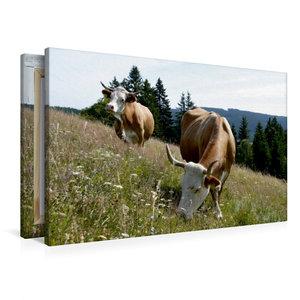 Premium Textil-Leinwand 90 cm x 60 cm quer Milchkühe auf artenre