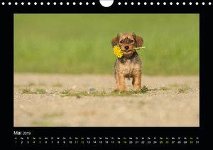 Allerlei Hundekinder (Wandkalender 2019 DIN A4 quer)