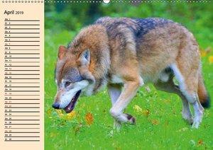 Wildlebende Tiere in den Bergen und Wäldern Europas (Wandkalende