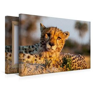 Premium Textil-Leinwand 45 cm x 30 cm quer Gepard
