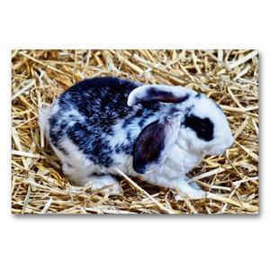 Premium Textil-Leinwand 90 cm x 60 cm quer Schwarz-weißes Kaninc
