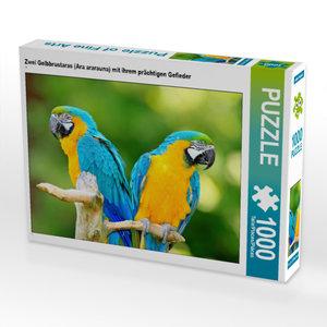 CALVENDO Puzzle Papageien: Zwei bunte Exoten im Porträt 1000 Tei