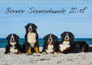 Berner Sennenhund 2018