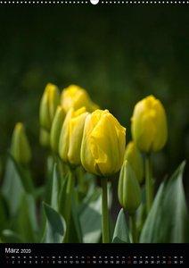 Im Tulpenreich
