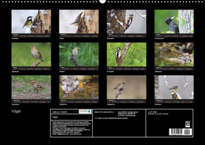 Vögel Stars vor der Kamera (Wandkalender 2019 DIN A2 quer)