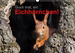 Guck mal, ein Eichhörnchen! (Wandkalender 2019 DIN A3 quer)