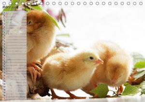 Tierisches aus der Küken-WeltAT-Version (Tischkalender 2019 DIN