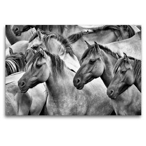 Premium Textil-Leinwand 120 cm x 80 cm quer Traumpferde