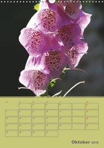 Naturbilder (Wandkalender 2019 DIN A3 hoch)