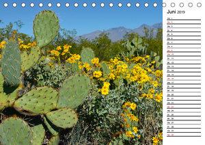 Flora und Fauna der Sonora Wüste (Tischkalender 2019 DIN A5 quer
