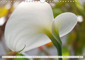 Blüteneleganz in Weiß (Wandkalender 2019 DIN A4 quer)