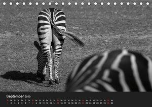 Spontane Fotografie: Tierpopos (Tischkalender 2019 DIN A5 quer)