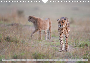 Emotionale Momente: Geparden