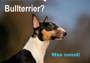 Bullterrier? Was sonst!
