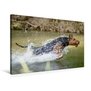Premium Textil-Leinwand 75 cm x 50 cm quer Airedale-Terrier