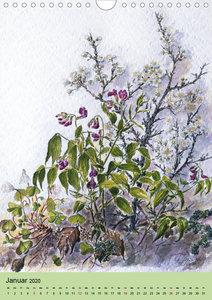 Die Flora in Baden-Württemberg (Wandkalender 2020 DIN A4 hoch)