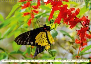Unterwegs in Malaysia (Wandkalender 2019 DIN A3 quer)