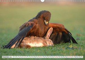 Wilde Vögel