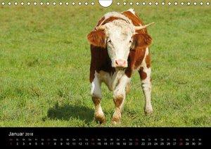 Die Welt der Kühe