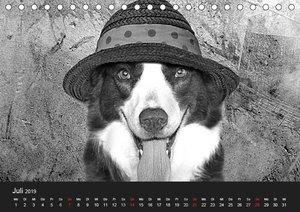 Hütehunde (Tischkalender 2019 DIN A5 quer)