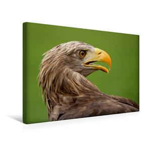 Premium Textil-Leinwand 45 cm x 30 cm quer Seeadler